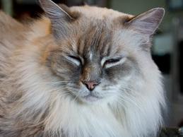 cat_chris03_oru120724.jpg