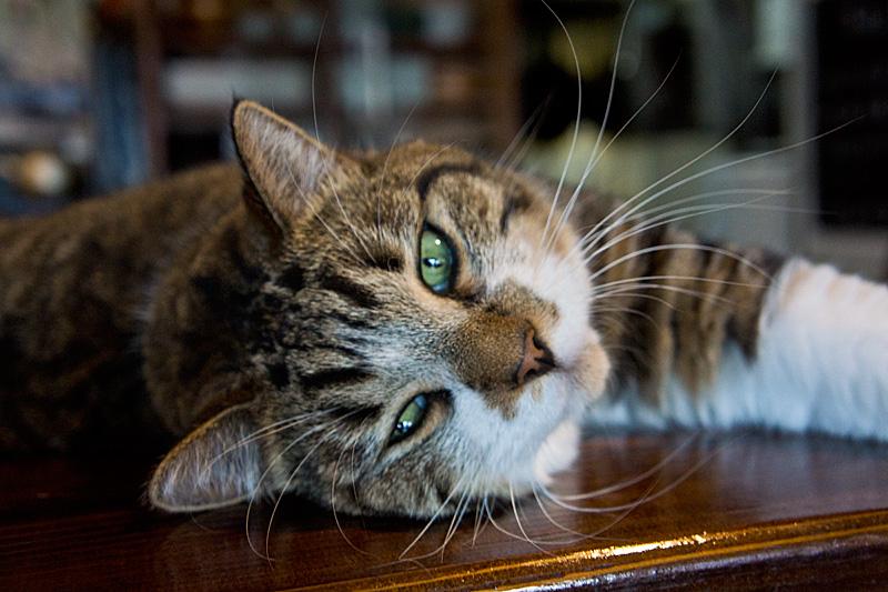 cat_tora03_oru120724.jpg